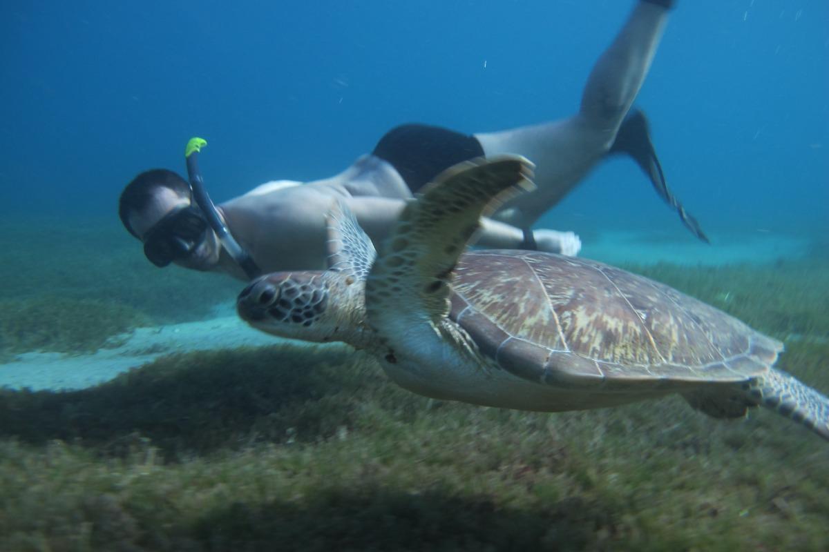 Nager avec une tortue - Location de vacances - Les Anses-d'Arlet
