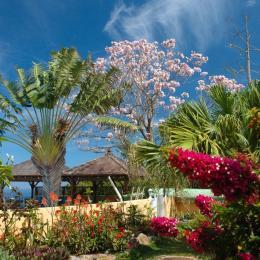 Jardin tropical Lataniers - Location de vacances - Saint-Leu