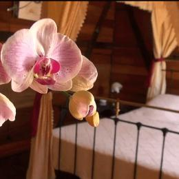 Chambre double - Location de vacances - L'Étang-Salé